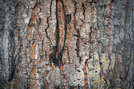 Textured bark of an old tree. Detailed image of the bark.