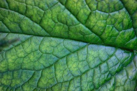 Vibrant green leaf macro close up natural background.