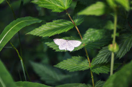White butterfly on a green leaf. Abstract floral background.