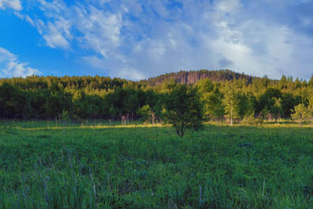 Landscape with forest and green meadow against cloudy blue sky.