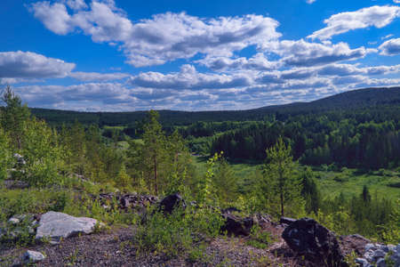 Landscape with pine forest and green meadow against cloudy blue sky.
