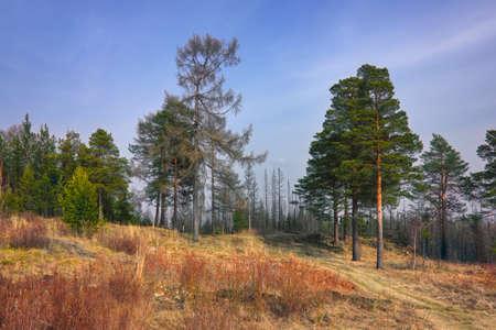Early spring in the forest. Forest meadow field landscape. Early spring forest meadow view. Forest meadow scene. Stock fotó