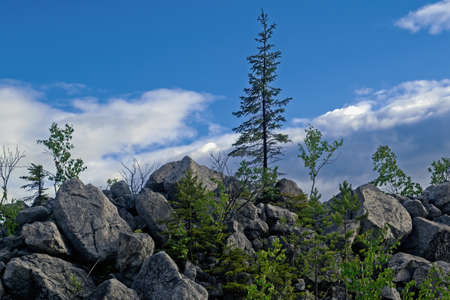Young fir tree on a rocky slope of the mountain against the background of blue sky and white clouds.