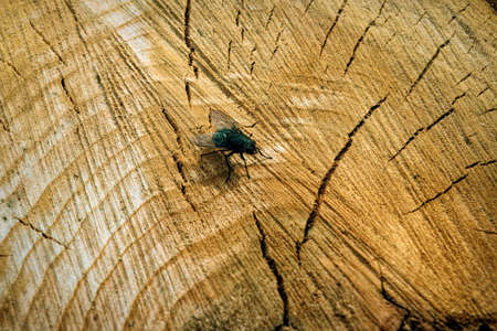 Top view of the fly on the background of a cut stump close-up.