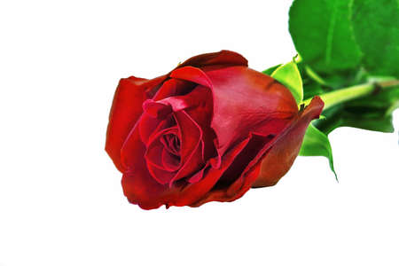 Bouquet of three red roses isolate on a white background. Roses bouquet isolated on white background.