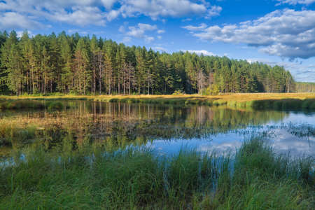 Summer landscape, forest trees are reflected in calm river water against a background of blue sky and clouds.