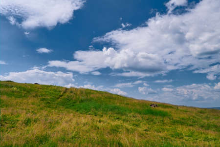 Summer landscape mountain slope with beautiful grass against the blue sky and cumulus white clouds. Stockfoto