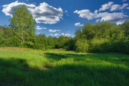 Landscape with forest and green meadow against cloudy sky.