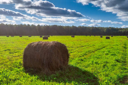 Haystacks on a mown meadow against a background of forest and blue sky with white clouds. The end of the summer. Stockfoto