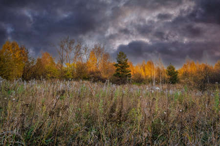 Autumn forest landscape in fall coloring against the backdrop of a dramatic cloudy sky. Stockfoto