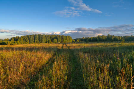Rural landscape mown meadow against the background of the forest and sky. Early autumn.