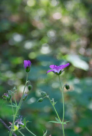 Amazing wild flowers at sunny day on a green blurred background. Wild flowers close up. Nature landscape.