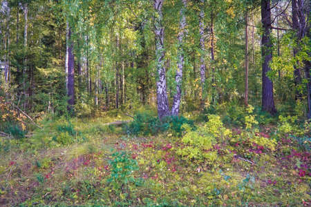 Forest closeup, beautiful summer landscape, sunlight shines through branches, trees with shadows travel destination scenic. Stockfoto