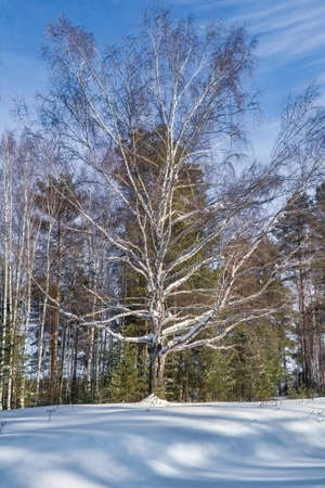 Beautiful winter landscape with snow covered trees. Trees covered with white fluffy snow. Stock fotó
