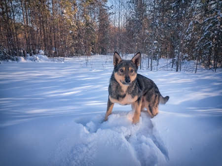 Portrait of a young dog standing against a background of white snow.
