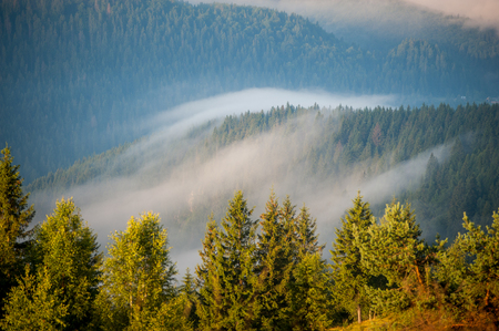Morning with fog over mountain slopes, covered with spruce forest