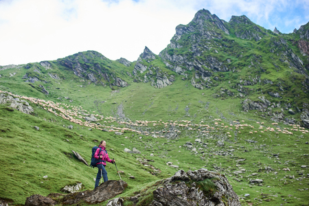 Young tourist female is standing at the foot of the mountain on a rock. On a blurred background, you can see a herd of sheep and a green mountainous terrain. Fagaras Mountains, Carpathians, Romania