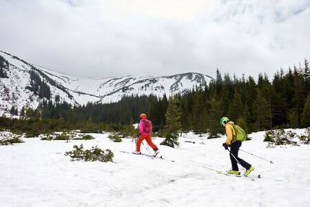 Two hikers with backpacks walking in skis on snow-covered valley near forest between fir trees. Back view. Winter adventures in mountains. Winter mountain view under white sky with copy space