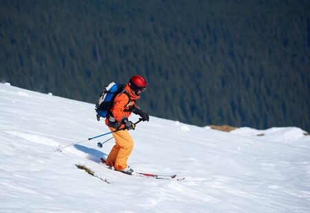 Hiker skier in bright clothing, helmet and goggles with backpack riding skis down snowy slope on background of dense mountain green spruce forest. Winter holidays, traveling and exploration concept.