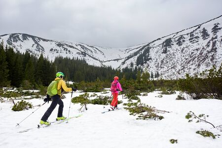 Couple of touring skiers backpackers walking on skis between fir trees to snowy mountain. Back view. Winter recreation, outdoors activities, pastime together. Mountain landscape, grey sky, copy space