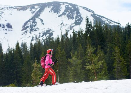Ski touring. Side view of young female skier in pink suit with backpack exploring foothills of snowy mountain and skiing up. Mountain view and fir trees on background. Winter recreation