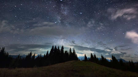 Magnificent panoramic view of night sky over grassy hill in coniferous wood. Fantastic landscape of mountain forest with tall conifer trees under majestic blue sky with stars. Concept of nature.