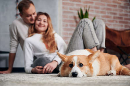 Selective focus photography of cute Corgi with young man and woman on blurred background. Adorable red and white dog lying on the floor while happy young couple cuddling and smiling. Stok Fotoğraf