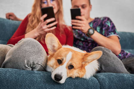Close up of family pet is bored, laying on couch and waiting for person to pay attention or play with him. On blurred background woman and man using smartphones at home. Stok Fotoğraf