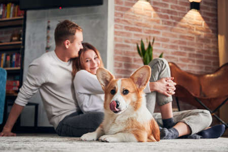 Adorable Corgi lying on the floor and looking to the camera. Happy family - man and woman resting with dog on carpet. Concept of leisure.