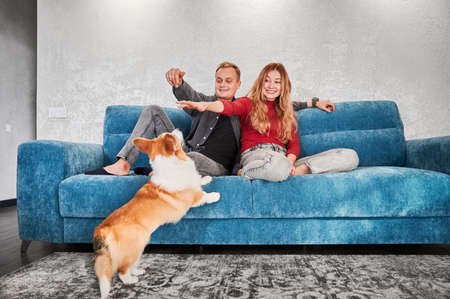 Happy young couple sitting on blue couch and smiling while playing with adorable dog. Joyful woman and man resting on sofa and having fun with cute Corgi while spending time together at home.