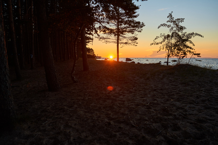 Beautiful summer view of deserted sandy beach and forest at sunset. Amazing landscape of wild nature with red sun rising at dusk, clear pink and blue morning sky and calm sea waves. Horizontal shot Фото со стока