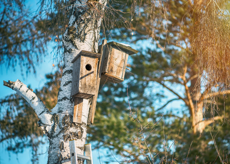 Two birdhouse on the birch in the park.