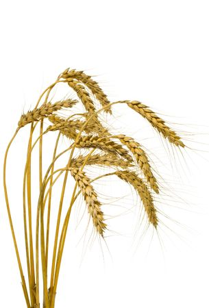 Bunch of wheat spikes, isolated, on white background photo
