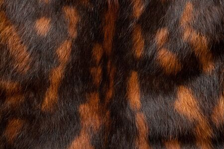 spotted fur: Detailed black-and red spotted fur texture Stock Photo