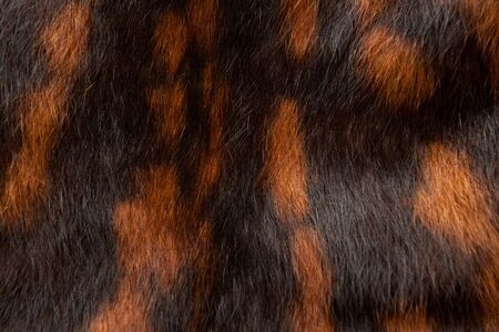 spotted fur: Spotted fur texture, black-and red