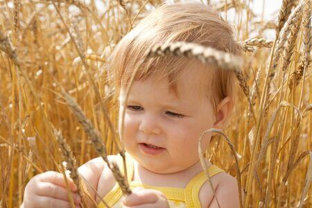 Kid examining wheat spikes in the field Stock Photo - 4304261