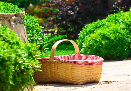 Large basket in bushes Stock Photo - 4433838
