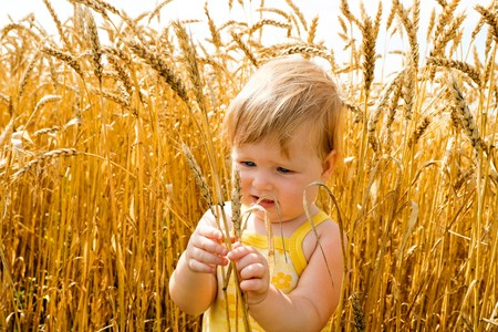 cropland: Kid examining wheat spikes in the field