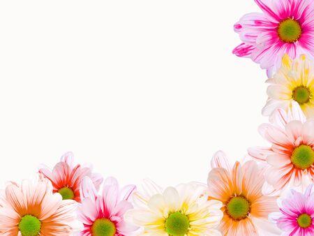 Corner frame made of daisy flowers, over white
