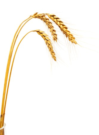 Three wheat ears in a vase, isolated photo