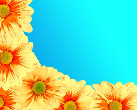 Yellow daisies making corner frame, on blue background photo