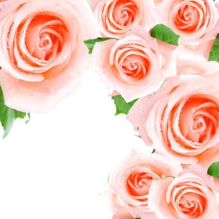 Pink roses making a frame Stock Photo - 4771279