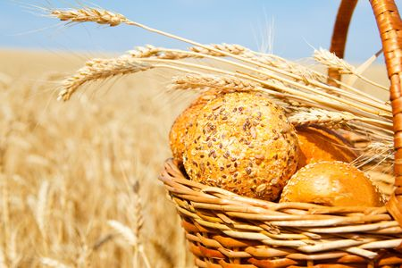 Wicker basket with bread and buns in a wheat field photo