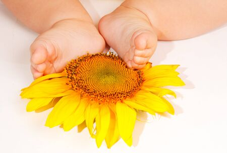baby's feet: Babys feet on a sunflower