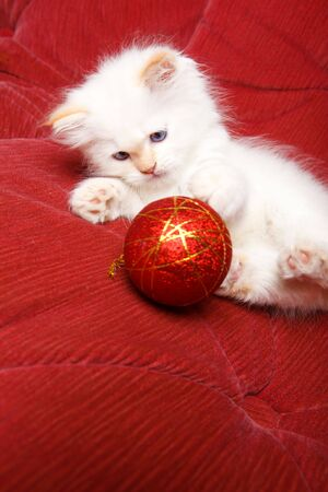 Baby cat playing with a red Christmas ball photo