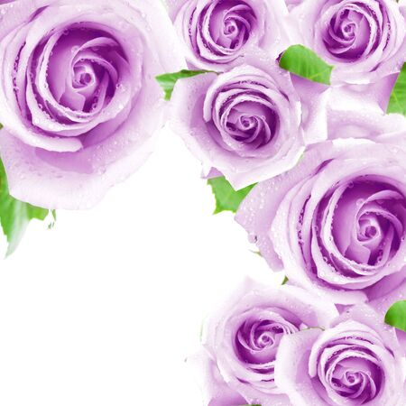 Purple roses making a frame photo
