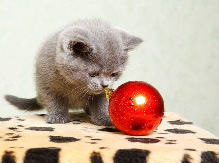 Baby cat playing with the Christmas decoration photo