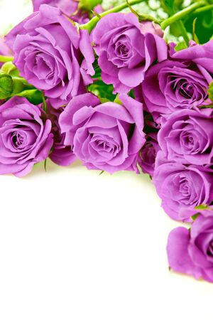 Purple roses bouquet on a white background