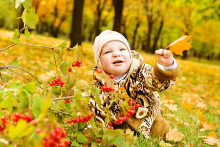 bebe gateando: Beb� rastreo sobre alfombra oto�al de hojas amarillas