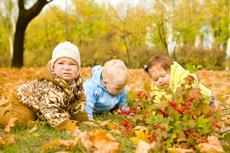 Curious babies on golden leaves Stock Photo - 7498601